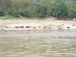 Khong_River_Laos5.jpg